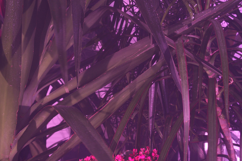 Black Light, White Light, Diptych detail by Geof Oppenheimer 2009